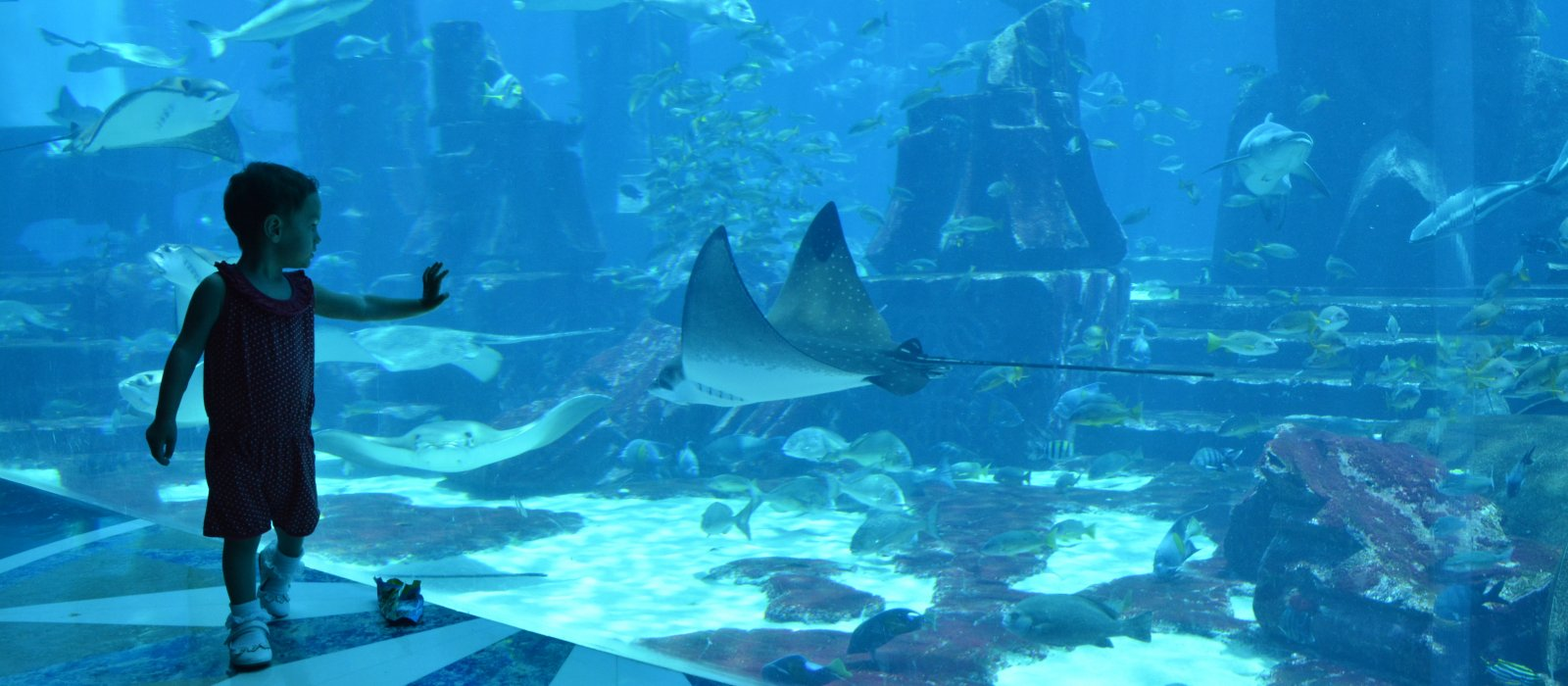 The Lost Chambers Aquarium w hotelu Atlantis The Palm